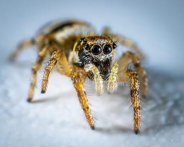 Can I vacuum spiders