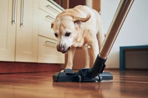 Best Inexpensive Vacuums For Pet Hair